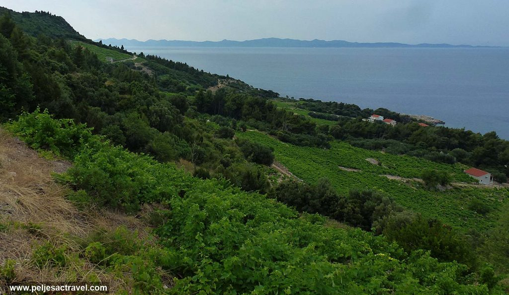 Vine groves of Dingač with views of Mljet island
