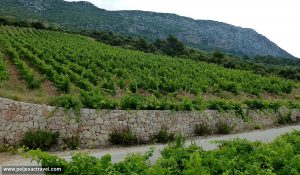 Dingač vineyard above a road to Borak and Trstenik