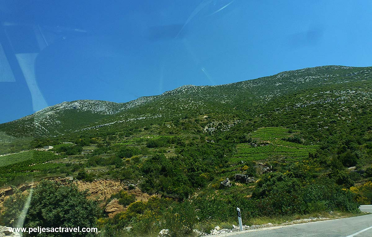 Vineyard in vicinity of Kapetani