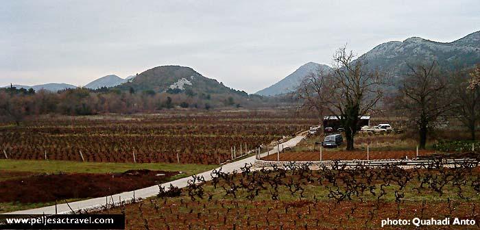 Vineyards in Kuna in winter