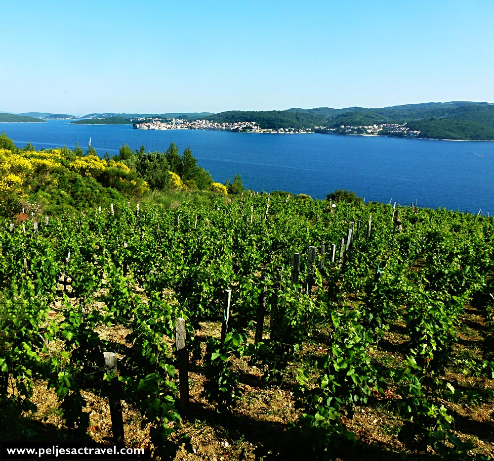 Spring in Peljesac vineyard