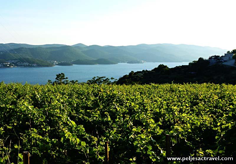 walking along vineyards