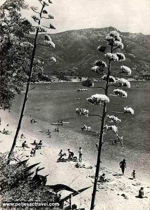 trstenica1962