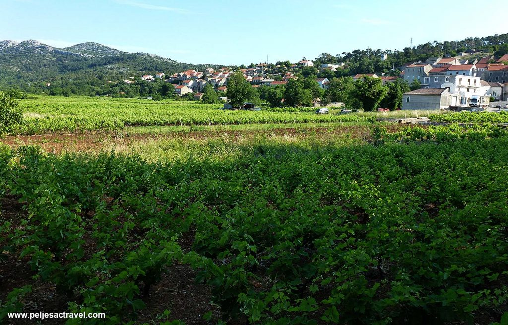 Kuna Vineyards - Peljesac