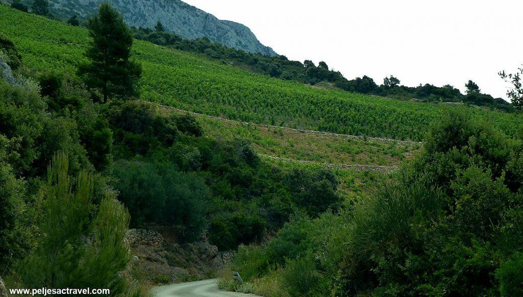 Vineyard on the slopes of Postup above Pratnjice Bay - Peljesac