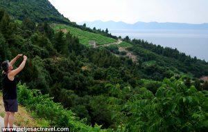 Taking photo of Dingac Vineyards, Peljesac